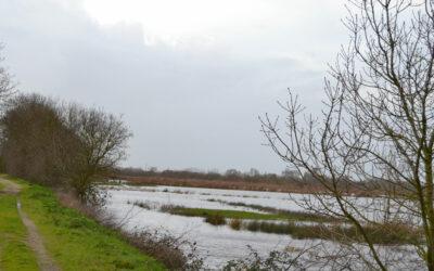 Inondations hivernales et remontées de nappe : un équilibre des marais perturbée